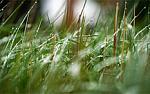 Какая газонокосилка лучше: бензиновая или электрическая{q} Что выбрать для покоса травы{q} Сравнение косилок